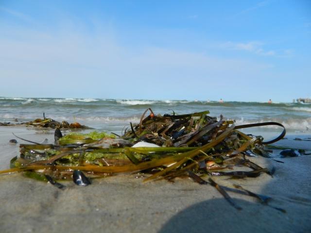 Пляж Балтийского моря