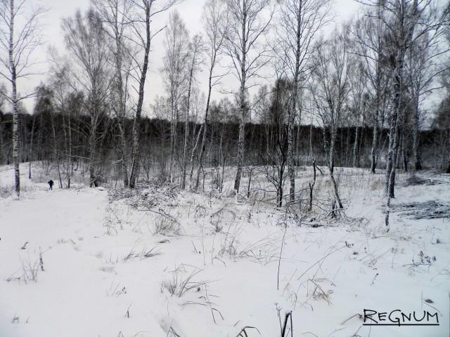 Незаконные рубки леса на Алтае