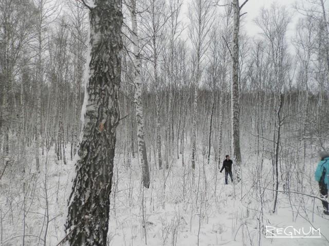 Дерево в Тягунском лесничестве Алтайского края