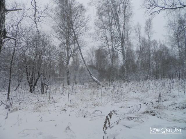 Лес в Тягунском лесничестве рубили незаконно и выгодно сбывали китайцам в Заринске