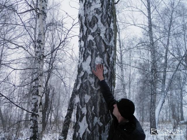 Незаконно клеймённое для вырубки дерево в Тягунском лесничестве Алтайского края