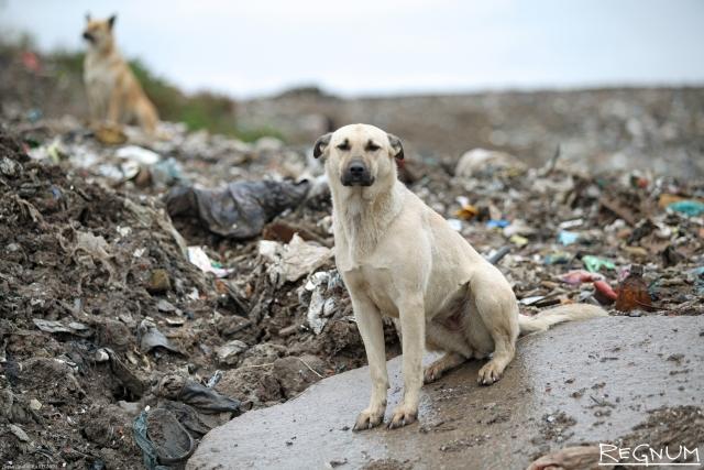 Ленобласть ужесточает санитарные нормы для мусорных полигонов