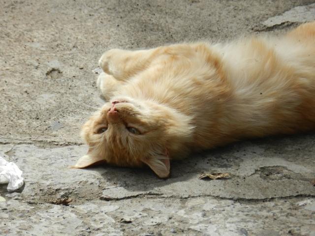 Реальные сроки: Россия признала, что животные испытывают боль и страдание