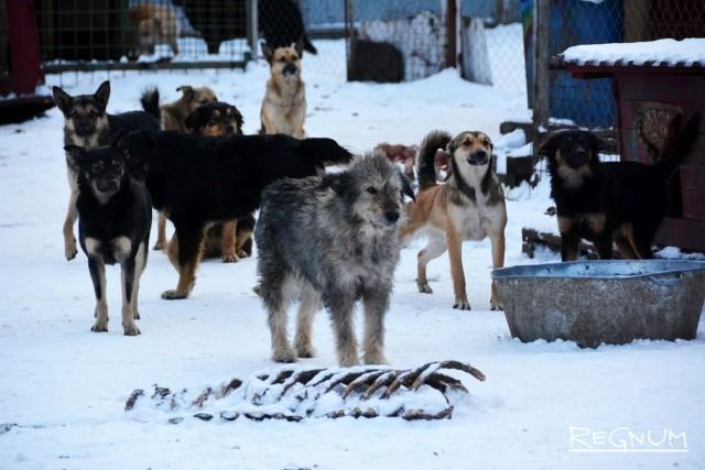 Все собаки распределены по вольерам, но могут покидать их и гулять по всей территории приюта