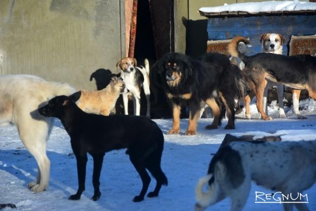 Будни воронежского приюта для бездомных собак