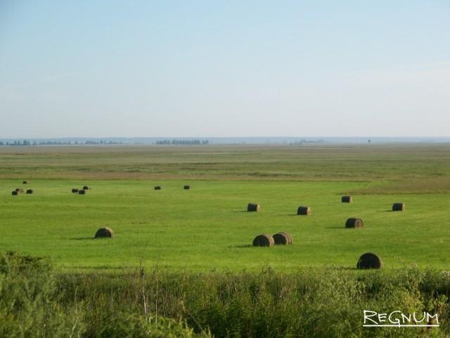 Алтайский край рассчитывает на альтернативный канал экспорта зерна