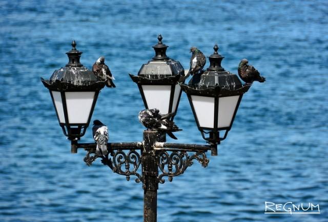 Севастопольские голуби