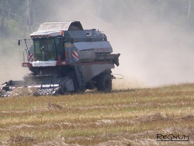Страда деревенская. Алтайский край, уборка урожая пшеницы