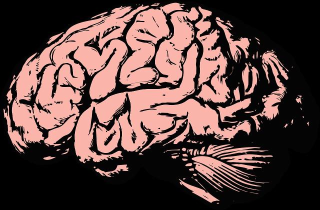Ученые выявили белок, ответственный за старение мозга