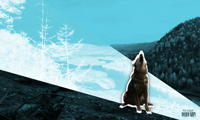 Сибирь: доходы падают, население убывает. Но не везде