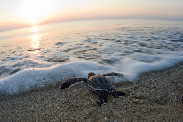 Китайские ученые: Мировой океан поставил новый температурный рекорд