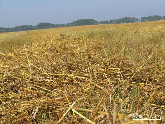 Алтайские аграрии собрали овёс. Но будут ли сеять в следующем году — не уверены
