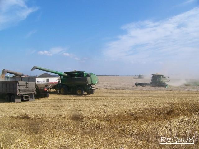 Уборка пшеницы на Алтае