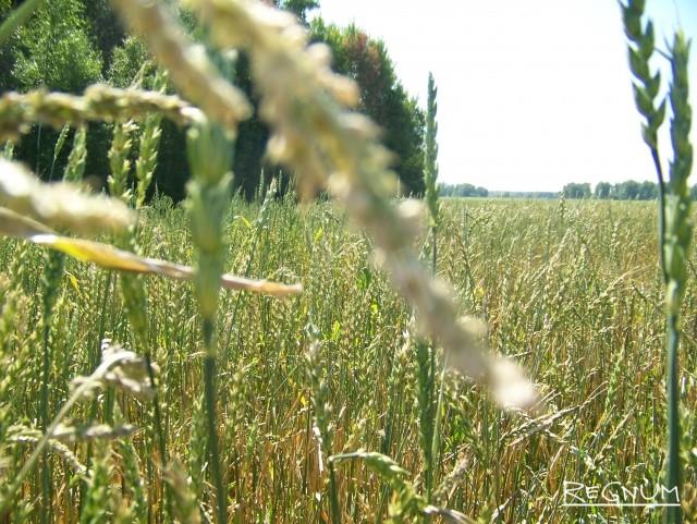 Государственная помощь фермерам лишь навредит? А что думают фермеры?