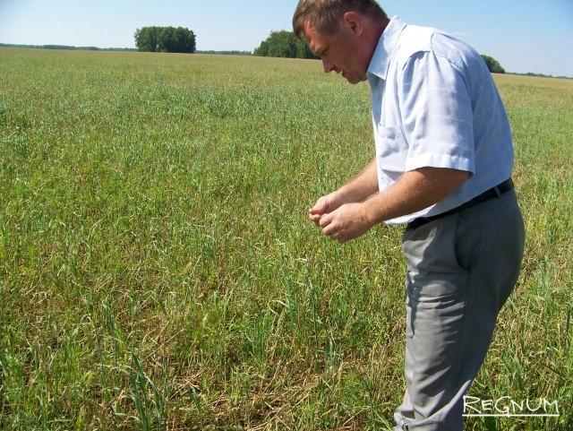 По словам заведующего сектором растениеводства отдела АПК администрации  Хабарского района Сергея Чавкунькина, в 2017 году урожай фермерами получен неплохой