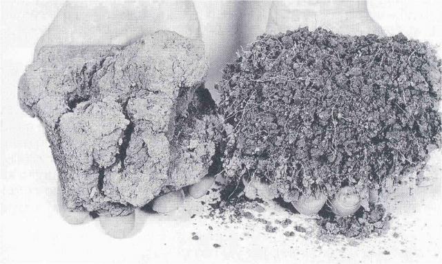 Деградировавшая почва слева и здоровая справа