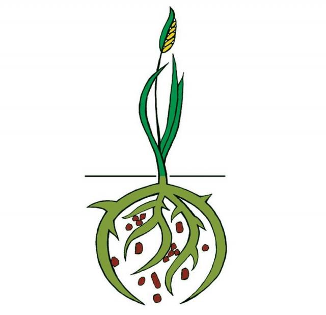 Схема, показывающая взаимоотношение растения и почвенных микроорганизмов