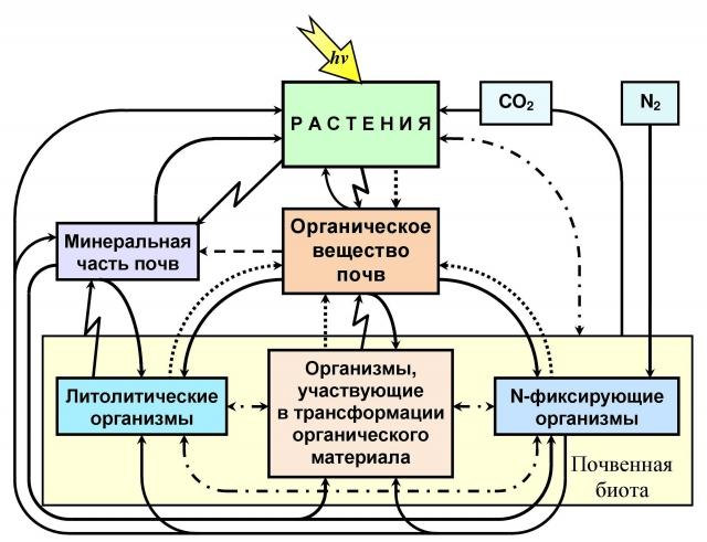Рис. 3. Трофическая взаимосвязь в системе почва-растение