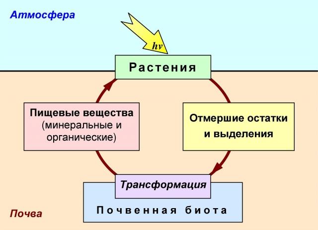 Рис. 2. Двойная трофическая связь между почвой и растениями