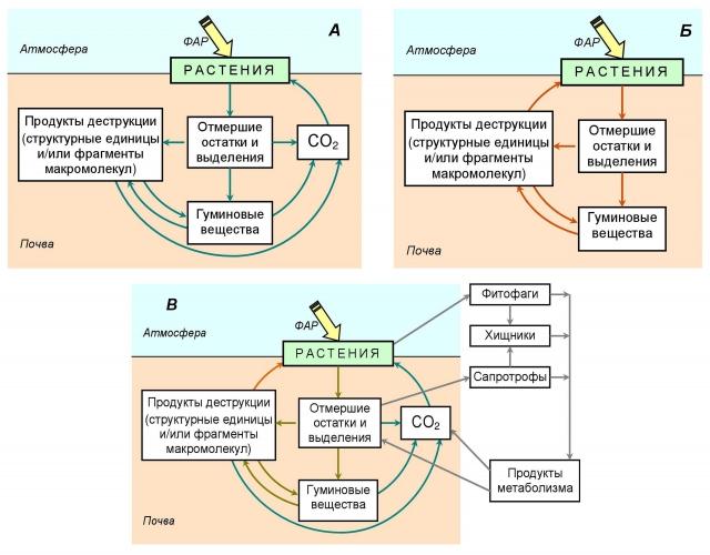 Рис. 8. Биологические круговороты углерода в экосистеме: А — известный биологический круговорот углерода; Б — круговорот органических соединений — структурных фрагментов макромолекул; В — биологические круговороты углерода в экосистеме