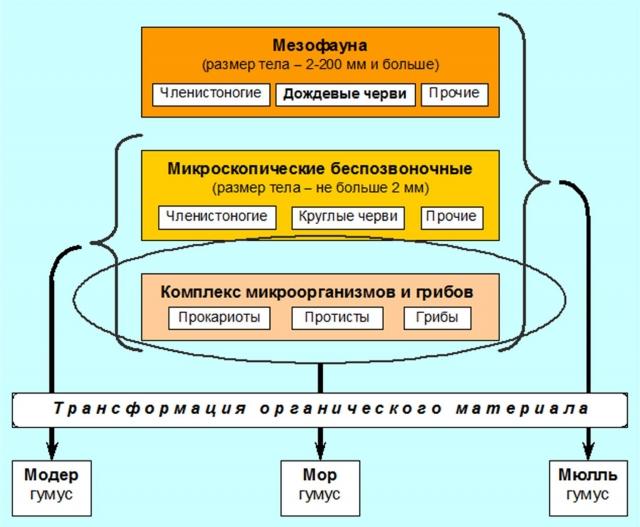 Рис. 10. Участие почвенной биоты в трансформации органического материала