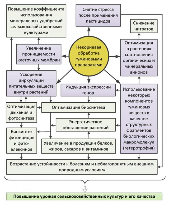 Рис. 11. Действие гуминовых веществ на биофизические и биохимические процессы, происходящие в растениях