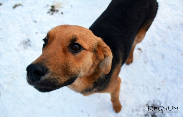 Спасать курян от бездомных собак будет фирма из Белгорода
