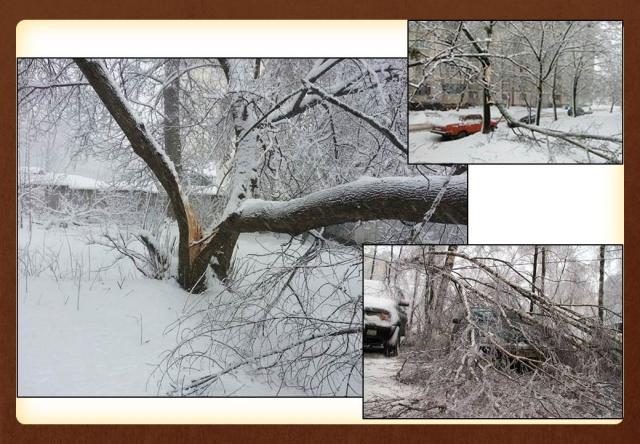 «Снегопад века»: снег падал вместе с деревьями