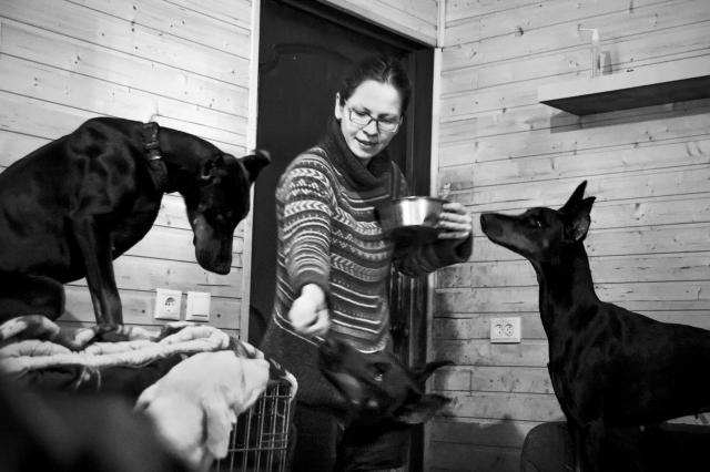 Лакомства собаки всегда получают из рук хозяйки