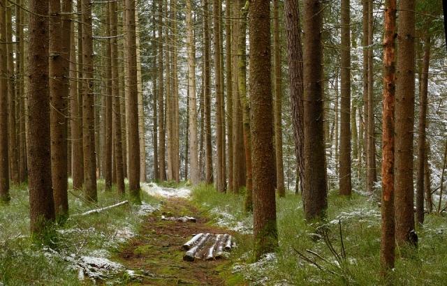 Лес как богатство: Национальный форум пройдет в сентябре