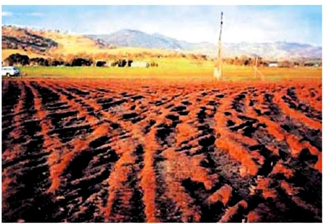 Причина потери 30% урожая лежит на поверхности