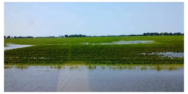 Рис. 4. Типичный вид поля с плужной подошвой после дождя