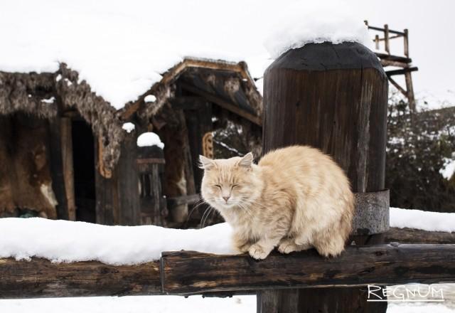 С наступлением холодов симферопольские коты запасаются терпением и отращивают густой подшерсток