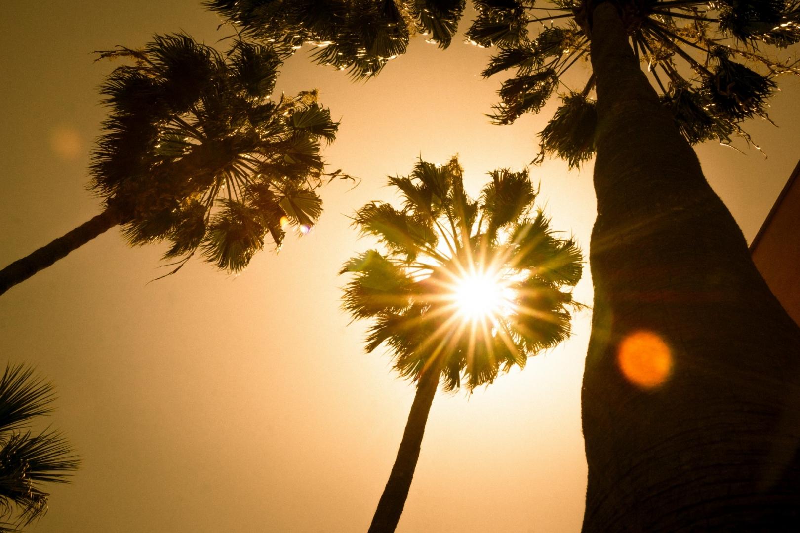 картинка пальмы и солнца милей изображен щите