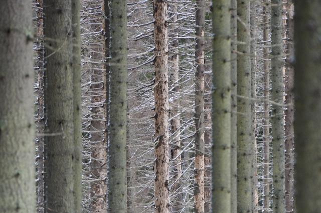 Лес в Ленобласти