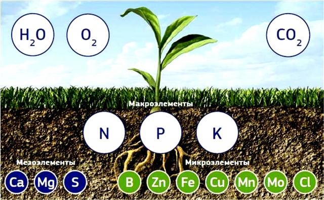 Новое понимание плодородия почв — условие выхода из кризиса земледелия