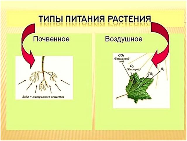Типы питания растений