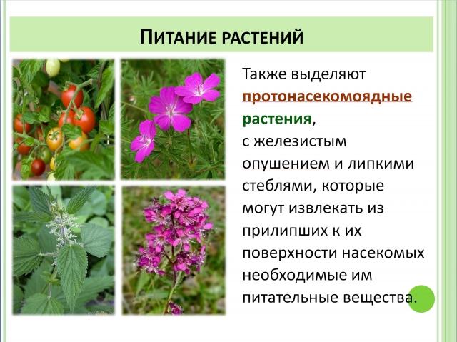 Протонасекомоядные растения