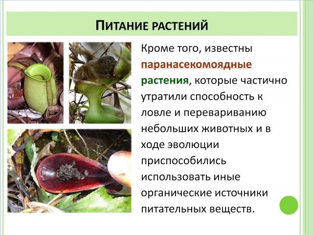 Паранасекомоядные растения
