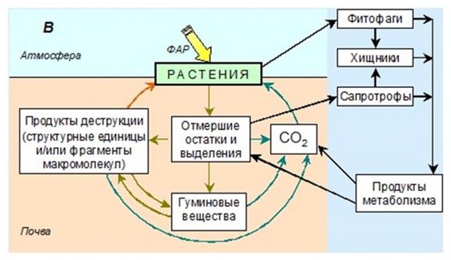 Схема круговорота органических молекул в системе почва-растение