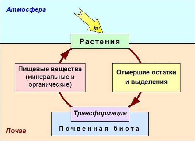 Двойная трофическая (пищевая) связь между почвой и растением