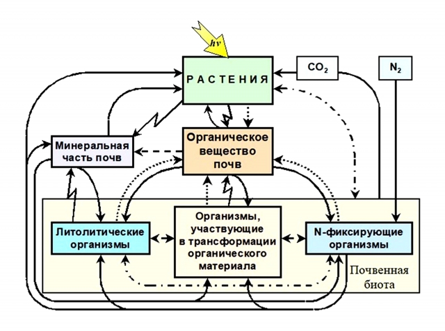 Трофическая (пищевая) взаимосвязьв системе почва-растение