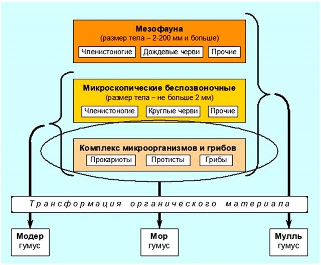 Роль почвенных организмов в образовании разных видов гумуса