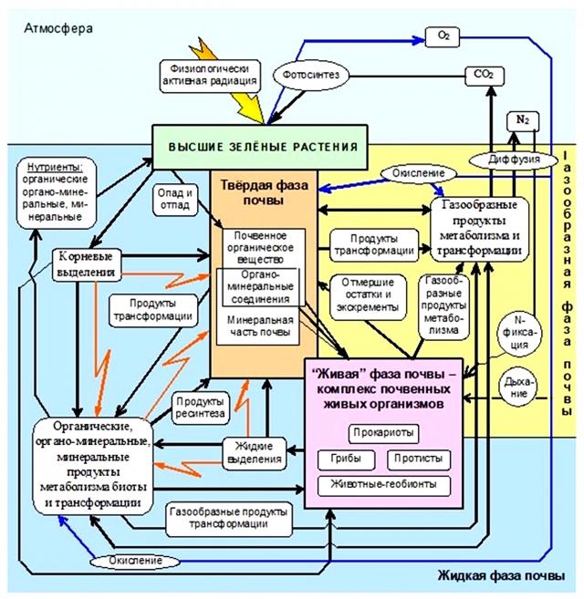Схема функционирования системы почва-растение