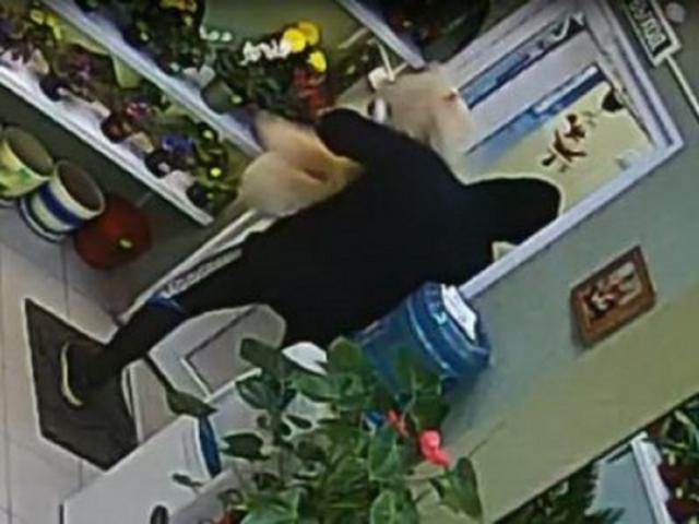 В Калуге задержаны похитители мягких игрушек