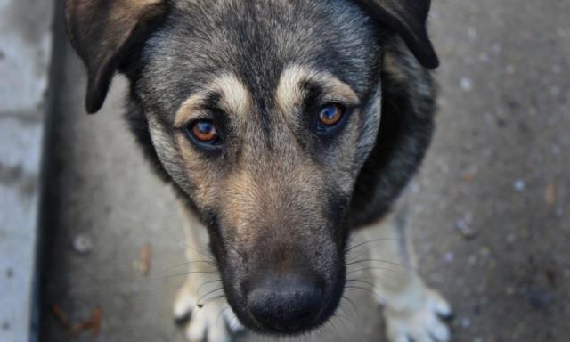 Кроме мусора, в Ярославскую область из Московской везут еще и собак
