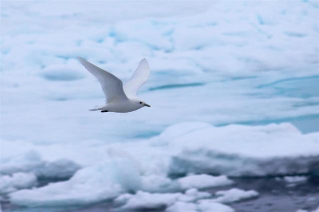 Тормозить развитие Арктики нельзя — но министерства не могут договориться