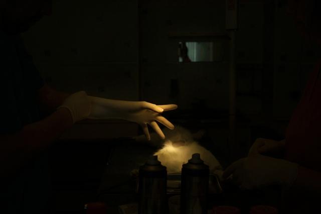 Ветеринарный врач-хирург надевает перчатки