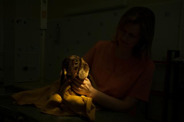 Операция закончена, такса приходит в себя. Как правило, после наркоза животные сильно мерзнут. Врач согревает собаку, укутав одеялом