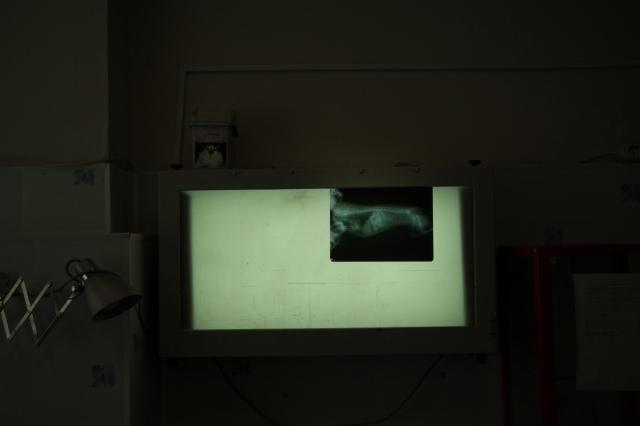 Рентгеновский снимок скелета кошки